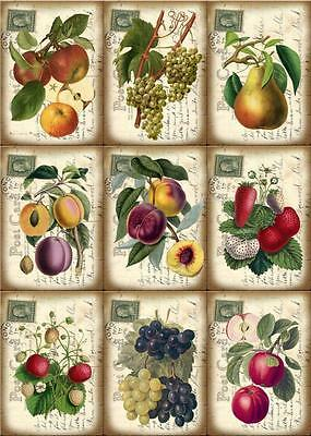 Fruit Postcard Style ~ Card Making Toppers / Scrapbooking