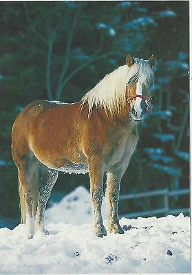 Horse Postcard -Just waiting in the snow