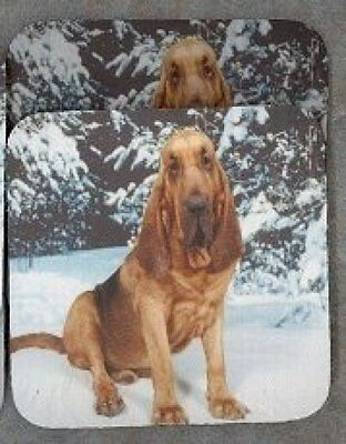 BLOODHOUND Rubber Backed Coasters #0671