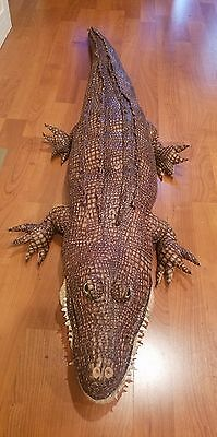 2002 Six Feet Long Huge Stuffed Alligator Lifesize Realistic Plush Gator