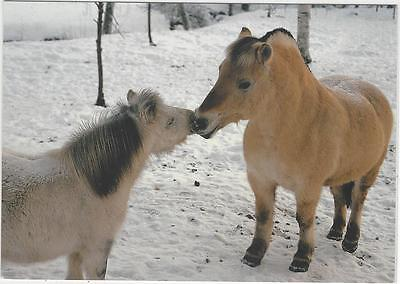 Horse Postcard -Norwegian Fjord and Pony Friend