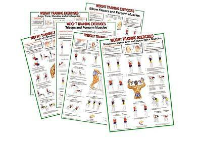 Weight Training, Body Building, Power Lifting, Exercise Sports Posters