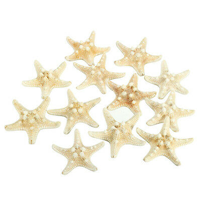 12 x White Knobby Starfish 5cm -7cm Sea Star Shell Beach Display Decor J7Q4