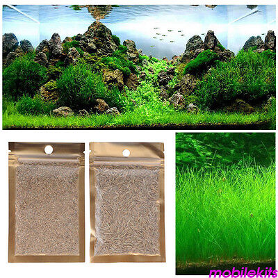 1x Aquarium Grass Mixed Seeds Water Aquatic Home Office Fish Tank Plant Decor