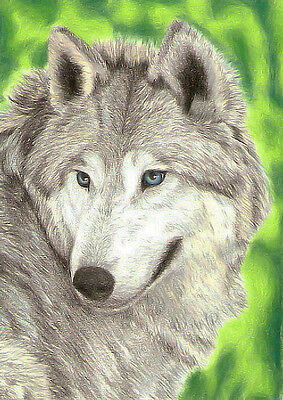 Original Sketch Card Drawing of A Wolf in Pencil Crayons