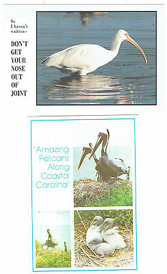 Pelicans & American White Ibis (2 cards)