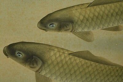 Hanging Scroll Picture Japanese Painting Carp Japan Asian Art ink Antique u67