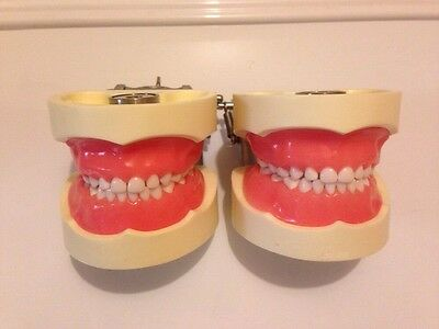 Lot Of 2 Pediatric Dental Typodonts Models Nissin With Pulpotomy Demonstration