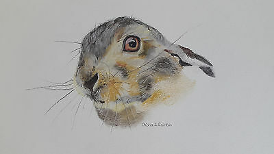 Hare (Leveret) Head study. Orignial Pastel Pencil Drawing from the Artist.