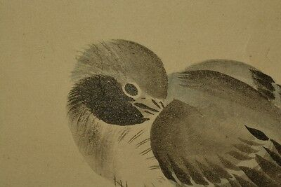 Camellia Hanging Scroll Japanese Painting Bird Picture Asian Ink Japan Old z32