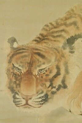 Hanging Scroll Japanese Painting Tiger Old Picture Ink  Antique Japan art b025