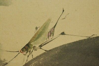 Japanese Painting Hanging Scroll grasshopper Watermelon Japan Picture ink a652