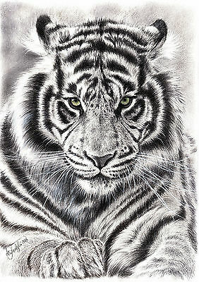 WILD ANIMAL-TIGER- A4 PRINT of the original pastel/charcoal drawing