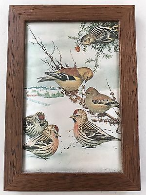 Vintage 17 X 12cm Silk Print Picture of 6 Birds on Snow Field with Wooden Frame