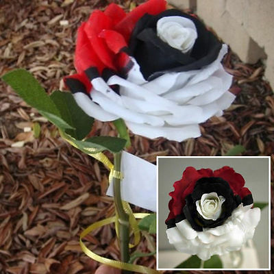 Red/White/Black Rose Exotic Flower Rose Seeds Rare Exotic Plant - AUS Stock