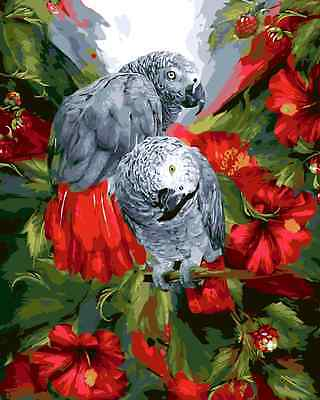 Acrylic Painting By Numbers Kit Canvas African Parrot 50*40cm S5 8106 AU STOCK