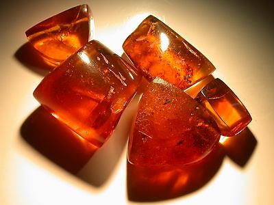 5 Pieces of Dominican AMBER Large GEMS with Variety of Fossil Insects, 16.7 g