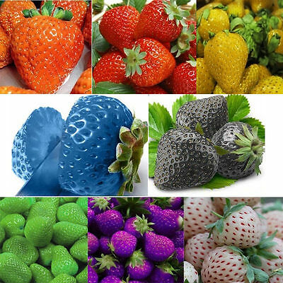 LOCAL AUS STOCK - Yellow, Purple, Pink, White, Green, Blue Strawberry Seeds ~10x