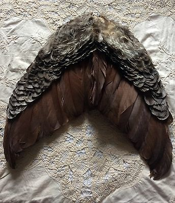 Antique Large French Hat Feather, Feather Wings. Early 1900s Paris Vintage