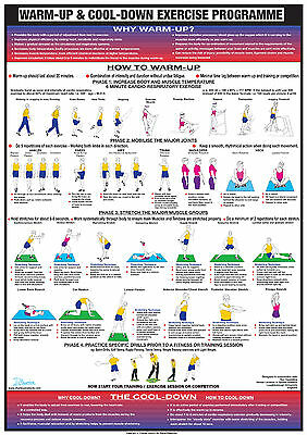 Warm Up and Cool Down Exercise Gym Poster Body Workout Chart