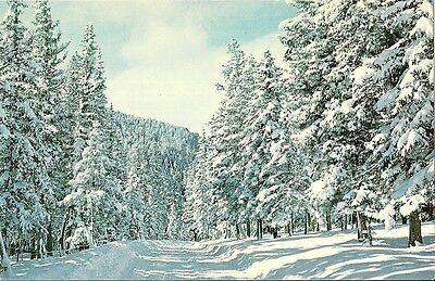 Vintage Postcard Winter Scene Highway 38 Red River New Mexico
