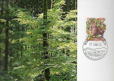 Postcard Maxi Card  1986  Enviroment   Nature  Forest   Lovely Condition