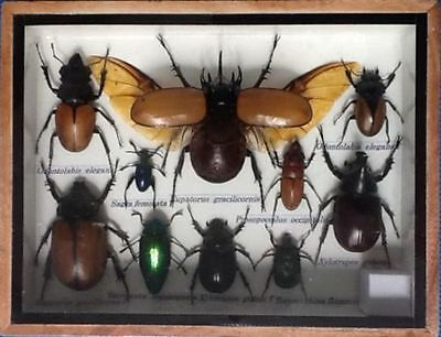 Real Exotic Insect Display Scorpion Jewel Beetle Bug Cicada Taxidermy Gift