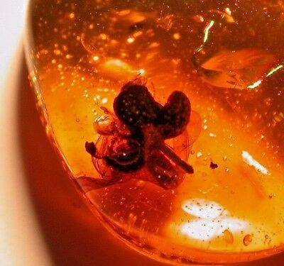 Beautiful Blooming Flower with Termite in Authentic Dominican AMBER Gem