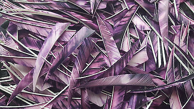 "36 x 4"" Shield camo PURPLE Feathers for traditional arrows / longbow / archery"