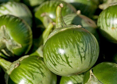 Giant Green Round Eggplant Vegetable 21 Seeds - Liveseeds