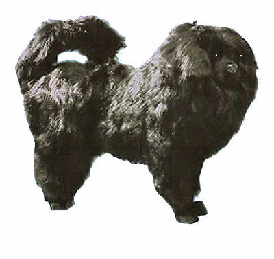 Chow Chow LARGEST Dog Collectible Photo Prop Almost Lifesize Replica