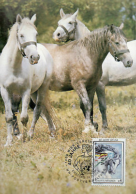 Maximum  Maxi Card 40Th Anniversary Of The World..horses .lovely Clean Condition