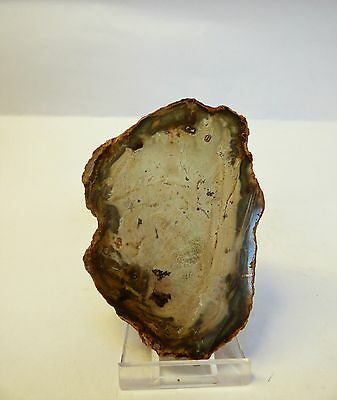 Polished Madagascar Fossil Wood 9.5 x 6.5 cm. Free display stand.
