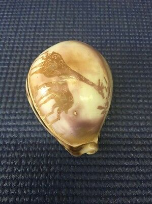 """DT2- Sea Shell 3"""" Carved Etched Natural. Giraffes"""