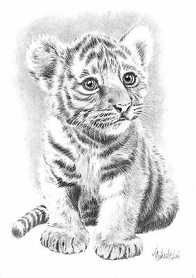 WILD ANIMAL-BABY TIGER- A4 PRINT of the original pencil drawing