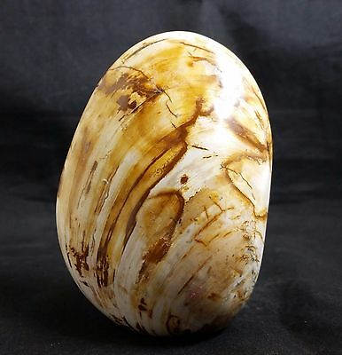 Lovely Fine Quality Polished Clam Shell Fossil Madagascar 200g