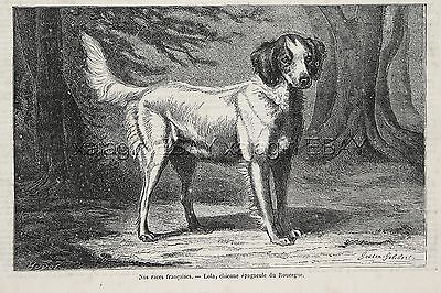 Dog Brittany Spaniel Named Lola, Early Look at Breed, 1870s Antique Print
