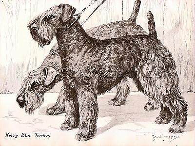 DOG Kerry Blue Terrier Pair, Beautiful 1930s Art Print by Nina Scott-Langley
