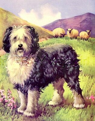 DOG Old English Sheepdog or Bearded Collie, 1930s Children's Nursery Print