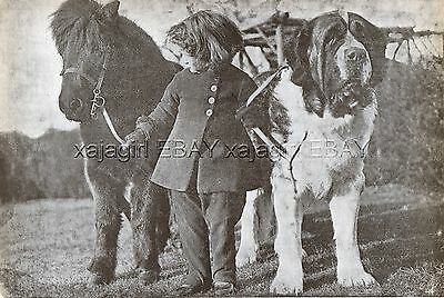 DOG Saint St. Bernard Champion (Named) & Shetland Pony, Vintage Print 1930s