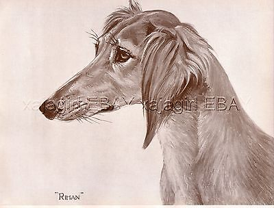 DOG Saluki Persian Greyhound (Named), Beautiful 1930s Art Print
