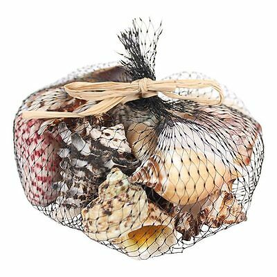 Craft Shells Assorted Sea Shells Natural Beach / Seashells Mixed Bag 250g