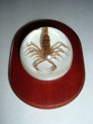 Scorpion Acrylic Paperweight with wood display stand - REAL SCORPION