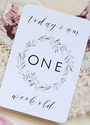 NEW - Blossom & Pear - Baby Milestone Cards in Evergreen