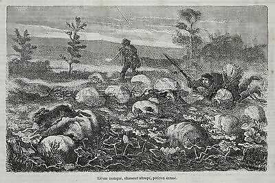 Rabbit Hunt Comic Hare Gets Better of Hunters, 1870s Antique Engraving Print