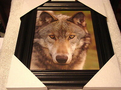Wolf 11X13 Mdf Framed Picture Poster ( Black Color Frame )