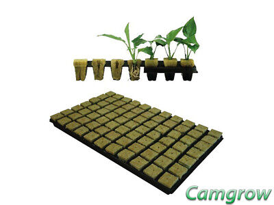 Grodan 36Mm Sbs Rockwool Propagation Cubes. Tray Of 77 For Seeds Or Cuttings