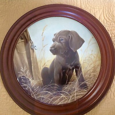 BRADEX Framed Collector Plate Command Performance THE WEIMARANER Field Puppies