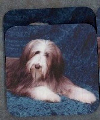BEARDED COLLIE Rubber Backed Coasters #0669