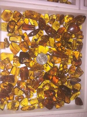 125 g Chiapas Amber, Authentic with Insects, Wholesale